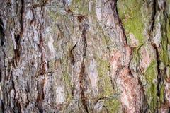 Φυσική ανασκόπηση Σύσταση του φλοιού ενός πλαισίου δέντρων γενικά Οριζόντιο πλαίσιο Στοκ εικόνες με δικαίωμα ελεύθερης χρήσης