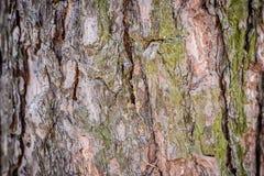 Φυσική ανασκόπηση Σύσταση του φλοιού ενός πλαισίου δέντρων γενικά Οριζόντιο πλαίσιο Στοκ φωτογραφίες με δικαίωμα ελεύθερης χρήσης