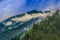 Φυσική βαθιά τροπική δασική ζούγκλα Janjehli, Ιμαλάια, Ινδία Στοκ φωτογραφία με δικαίωμα ελεύθερης χρήσης