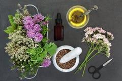 Φυσική βοτανική προετοιμασία ιατρικής Στοκ Εικόνες