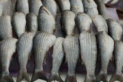 Φυσική γκρίζα σύσταση από μια σειρά των φρέσκων ψαριών ρεγγών θάλασσας στοκ φωτογραφία με δικαίωμα ελεύθερης χρήσης