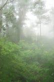 φυσική δασώδης περιοχή ο&m Στοκ φωτογραφία με δικαίωμα ελεύθερης χρήσης
