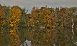 Φυσική ελώδης περιοχή κατά τη διάρκεια του χρόνου φθινοπώρου στοκ εικόνες