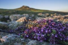 Φυσική ενδοχώρα στο εθνικό πάρκο ακτών Pembrokeshire, UK στοκ εικόνα με δικαίωμα ελεύθερης χρήσης