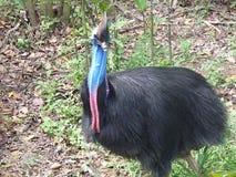 Φυσική ζούγκλα ζώων τρόπου ζωής στο ζωολογικό κήπο Σιγκαπούρη Στοκ φωτογραφία με δικαίωμα ελεύθερης χρήσης