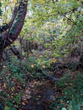 Φυσική ζούγκλα Στοκ φωτογραφία με δικαίωμα ελεύθερης χρήσης