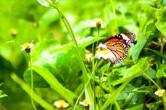 Φυσική ζωηρόχρωμη πεταλούδα ζωικής ζωής στο ζωηρόχρωμο λουλούδι Στοκ φωτογραφία με δικαίωμα ελεύθερης χρήσης