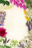Φυσική ιατρική λουλουδιών και χορταριών Στοκ Εικόνες