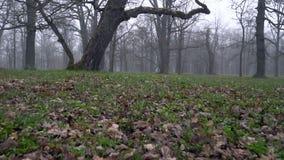Φυσική και γραφική άποψη του πάρκου Kadriorg το πρωί απόθεμα βίντεο