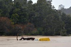 Φυσική καταστροφή - πλημμύρα Στοκ φωτογραφίες με δικαίωμα ελεύθερης χρήσης