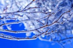 Φυσική καταστροφή στον Καναδά με τους παγωμένους οφθαλμούς και τα παγάκια που κρεμούν από τους κλάδους δέντρων Πραγματικοί νεαροί στοκ φωτογραφία με δικαίωμα ελεύθερης χρήσης