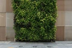 Φυσική καφετιά ξύλινη σύσταση σχεδίων και κάθετο πράσινο υπόβαθρο τοίχων στοκ φωτογραφίες με δικαίωμα ελεύθερης χρήσης