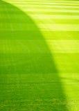 Φυσική νέα πράσινη νέα παιδική χαρά σύστασης χλόης Στοκ Εικόνες