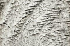 Φυσική ξύλινη σύσταση - χονδροειδής επιφάνεια του barkless κορμού δέντρων στοκ φωτογραφία με δικαίωμα ελεύθερης χρήσης