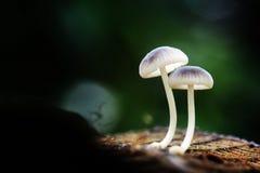 Φυσική ομορφιά - μανιτάρι Στοκ Εικόνα