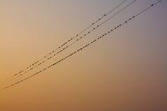 Φυσική παραμονή πουλιών στην ηλεκτρική γραμμή Στοκ Εικόνες