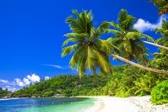 φυσική παραλία με τους φοίνικες καρύδων Στοκ Φωτογραφίες