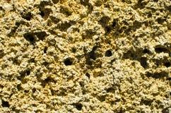 Φυσική πορώδης πέτρα Coquina Δομικό υλικό Στοκ Φωτογραφίες