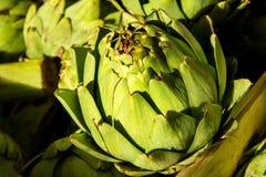 Φυσική πράσινη αγκινάρα στοκ φωτογραφία με δικαίωμα ελεύθερης χρήσης