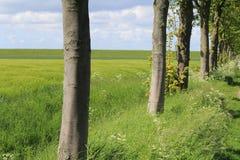 Φυσική πράσινη ηλιοφάνεια τοπίων την άνοιξη στην Ολλανδία στην επαρχία με φρέσκοι πράσινος και μπλε Στοκ Εικόνες