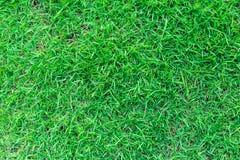 Φυσική πράσινη σύσταση χλόης ή πράσινο υπόβαθρο χλόης για το σχέδιο Στοκ φωτογραφίες με δικαίωμα ελεύθερης χρήσης