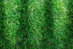 Φυσική πράσινη σύσταση χλόης ή πράσινο υπόβαθρο χλόης για το σχέδιο Στοκ φωτογραφία με δικαίωμα ελεύθερης χρήσης