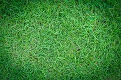 Φυσική πράσινη σύσταση χλόης ή πράσινο υπόβαθρο χλόης για το σχέδιο Στοκ Φωτογραφίες