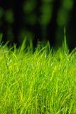 Φυσική πράσινη χλόη στο φωτεινό φως του ήλιου Στοκ φωτογραφίες με δικαίωμα ελεύθερης χρήσης