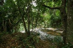 Φυσική πτώση νερού ρευμάτων στη ζούγκλα Στοκ εικόνες με δικαίωμα ελεύθερης χρήσης