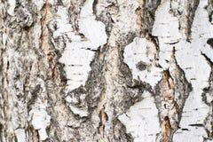 φυσική σύσταση Άσπρο χρώμα οι ανασκοπήσεις αποφλοιώνουν το σκοτεινό δέντρο σύστασης Στοκ Φωτογραφία
