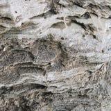 Φυσική σύσταση βράχου Στοκ Εικόνες