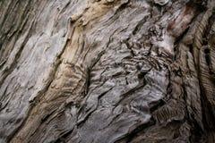 Φυσική σύσταση κινηματογραφήσεων σε πρώτο πλάνο του παλαιού που καταρρέει σάπιου ξύλου Εκλεκτική εστίαση Στοκ Εικόνες