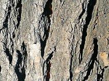φυσική σύσταση φλοιών ανασκόπησης Στοκ εικόνα με δικαίωμα ελεύθερης χρήσης