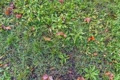 Φυσική σύσταση χλόης φθινοπώρου στοκ εικόνες