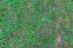 Φυσική σύσταση χλόης φθινοπώρου στοκ φωτογραφίες με δικαίωμα ελεύθερης χρήσης