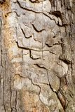 Φυσική υπόβαθρο ή σύσταση φλοιών Στοκ Εικόνες