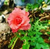 Φυσική φωτογραφία λουλουδιών Στοκ Εικόνες