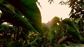 φυσική φωτογραφία ομορφιάς Στοκ Φωτογραφίες