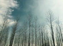 Φυσική φωτογραφία της Ελβετίας σύννεφων Στοκ Εικόνα