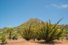 φυσική φύση βουνών τοπίων της Αλμερία Ανδαλουσία αγαύης cabo de desert gata κοντά στο φυτό ισπανικά πάρκων Στοκ φωτογραφίες με δικαίωμα ελεύθερης χρήσης