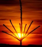 Φυσική χρυσή κορώνα Στοκ Εικόνα