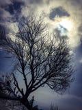 Φυσική όμορφη άποψη του παλαιού δέντρου Στοκ Εικόνες