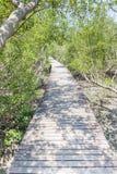 Φυσική όμορφη σκηνή της ξύλινης διάβασης πεζών γεφυρών στο μαγγρόβιο για Στοκ Εικόνες