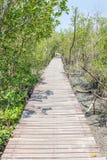 Φυσική όμορφη σκηνή της ξύλινης διάβασης πεζών γεφυρών στο μαγγρόβιο για Στοκ φωτογραφία με δικαίωμα ελεύθερης χρήσης