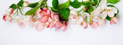 Φυσική floral σύνθεση με τα λουλούδια της Apple Στοκ φωτογραφία με δικαίωμα ελεύθερης χρήσης