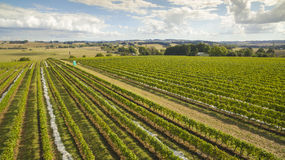 Φυσικοί αμπελώνας και καλλιεργήσιμο έδαφος, Αυστραλία Στοκ Εικόνες