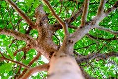 Φυσικοί πράσινοι κλάδοι δασικών δέντρων Στοκ Εικόνες