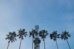 Φυσικοί φοίνικας και πύργος που αντιμετωπίζουν το μπλε ουρανό Στοκ εικόνα με δικαίωμα ελεύθερης χρήσης
