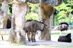 Φυσικός ανοικτός ζωολογικός κήπος για να δει τη ζωική ζωή Στοκ Εικόνες