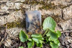Φυσικός αχάτης πετρών στο ξύλινο και υπόβαθρο βρύου Στοκ φωτογραφία με δικαίωμα ελεύθερης χρήσης